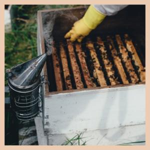 photo de ruche